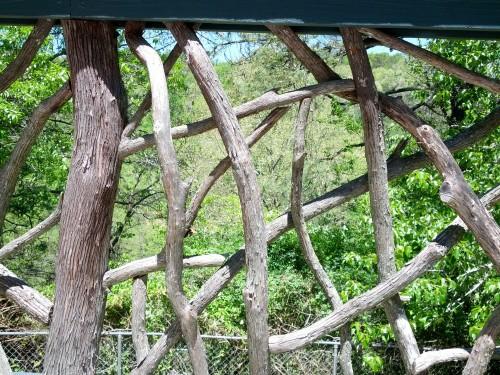 weathered mountain laurel