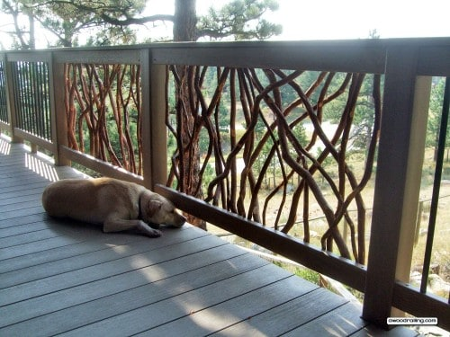 Mountain Laurel Handrail with a Sleepy Dog