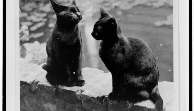 obligatory-cats-on-railing