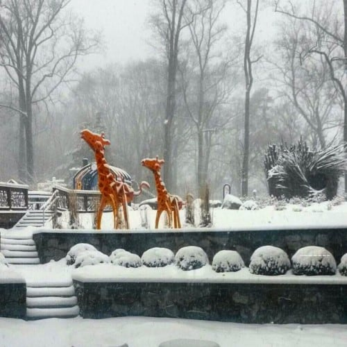 Childrens Inn Giraffes in Winter