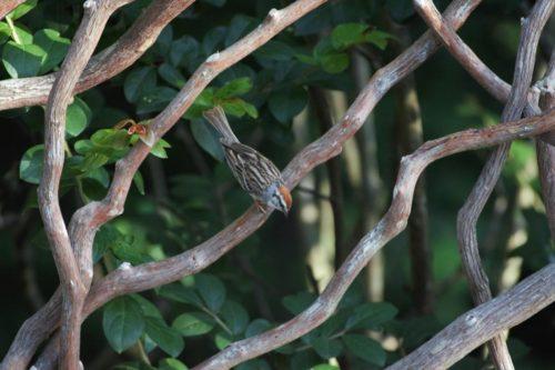 Mountain Laurel Handrails With Bird