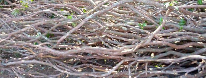 Laurel Branch Material